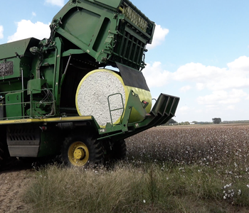 VIDEO: Rick Bransford Farm Update | Cotton and Weather